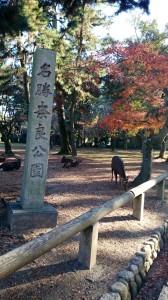 Nara Park 27-1-8