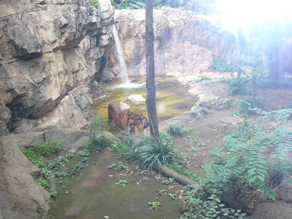a-Ueno Zoo