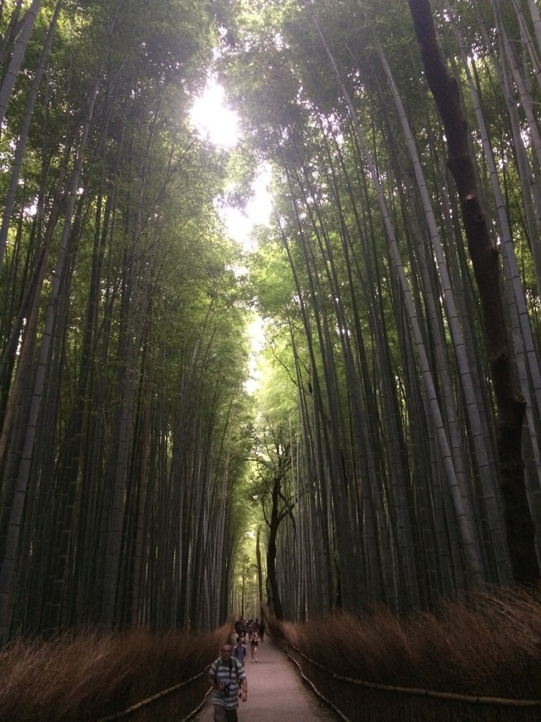 kyo bamboo forest small